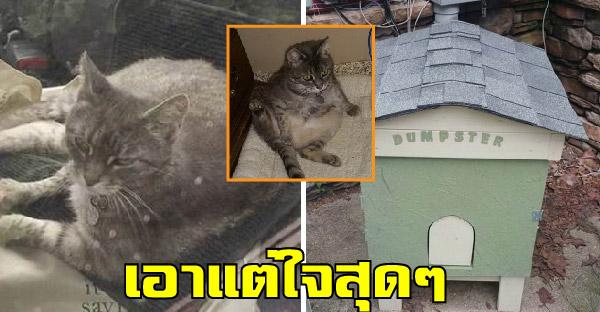 คุณหมอช่วยชีวิตแมวจรจัดเอาแต่ใจ สร้างบ้านให้ก็ไม่อยู่ เพราะชอบนอนในรถหมอมากกว่า