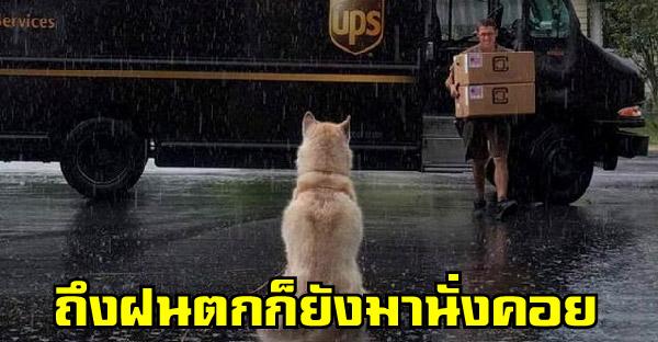 ประสบการณ์สุดประทับใจของพนักงานส่งของ ที่พวกเขาได้เจอกับสุนัข เมื่อเขาเจอสุนัขระหว่างส่งของในแต่ละวัน