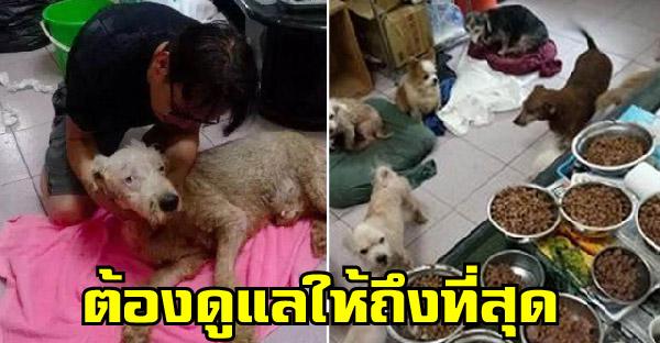 หนุ่มดูแลสุนัขไร้บ้านและพิการหลายร้อยตัว โดยไม่หวังสิ่งตอบแทนนานกว่า 8 ปี
