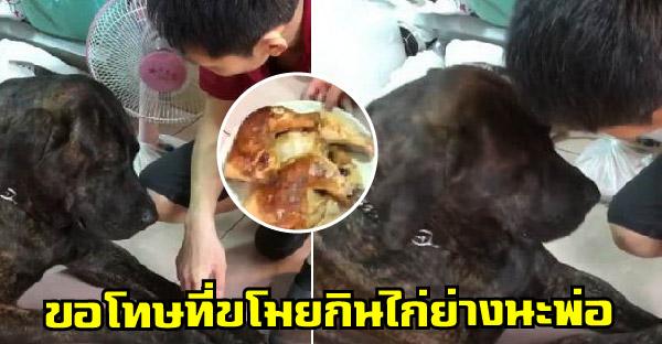 น้องหมาโดนเจ้าของจับได้ว่าขโมยไก่ย่าง และนางขอโทษได้น่าเอ็นดูจริงๆ
