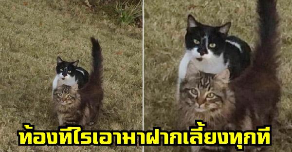 แม่แมวจรจัดพาลูกมาฝากเลี้ยง จนผ่านไปหนึ่งปีนางก็หิ้วท้องโตมาฝากมนุษย์เลี้ยงอีกรอบ