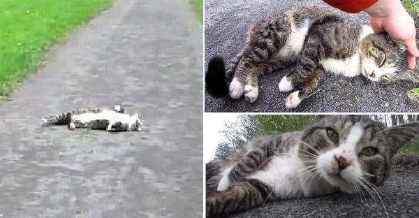 หนุ่มออกไปเดินเล่น แต่เจอแมวเจ้าถิ่นเดินตัดหน้า นอนขวางกลางถนน เขาจึงต้องจ่ายส่วยด้วยการเล่นด้วยกันก่อน