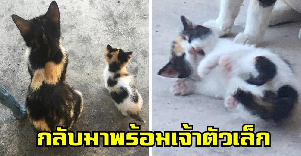 เมื่อแมวจรจัดที่ให้ข้าวทุกวันหายหน้าไปเกือบเดือน ก่อนนางจะกลับมาพร้อมเจ้าตัวเล็ก