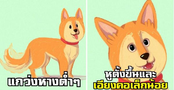 16 ภาษากายสุนัขที่ทาสหมาทุกคนควรรู้เอาไว้