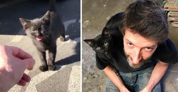 ลูกแมวจรจัดเจอทาสที่ถูกชะตา จึงทำตัวติดหนึบไม่ยอมห่างไปทุกที่