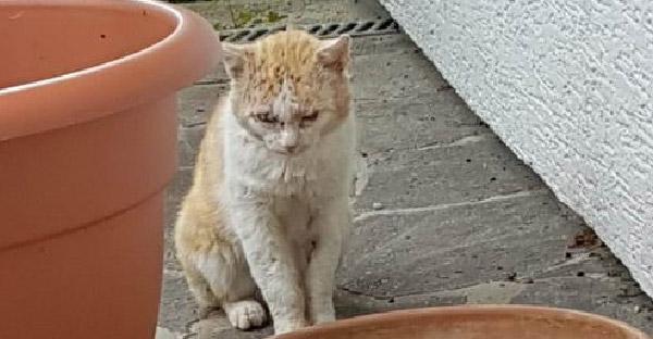 แมวจรจัดที่ไม่เคยไว้ใจใคร เหนื่อยกับชีวิตข้างถนน ยอมเข้าบ้านให้มนุษย์รักษาบาดแผลเต็มตัว