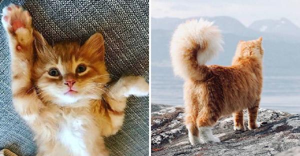 ครอบครัวใจดีช่วยลูกแมวโดนทิ้งไม่มีใครสนใจ ก่อนเติบโตขึ้นหางฟูฟ่องน่ารักสุดๆ