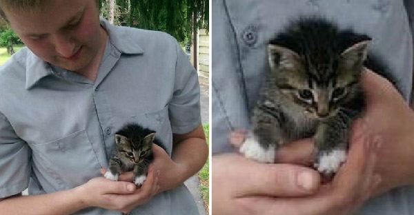 หนุ่มจูงหมาเจอลูกแมวจรจัดเดินมาเกาะขาอย่างกล้าหาญ สุดท้ายพากลับไปอยู่บ้านเรียบร้อยโรงเรียนทาสแมว