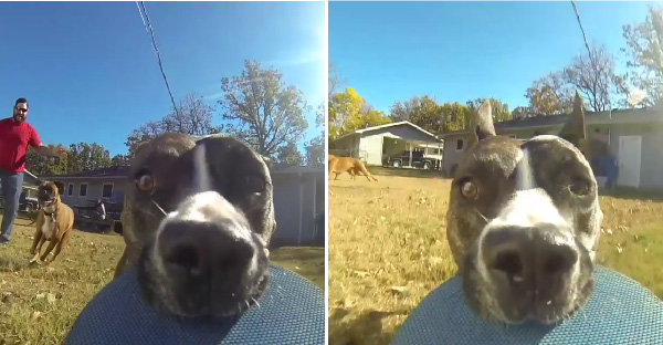 """เจ้าหมาตัวดีขโมย """"กล้องโกโปร"""" และวิ่งหนีเจ้าของ กลายเป็นการวิ่งไล่จับสุดมันส์"""