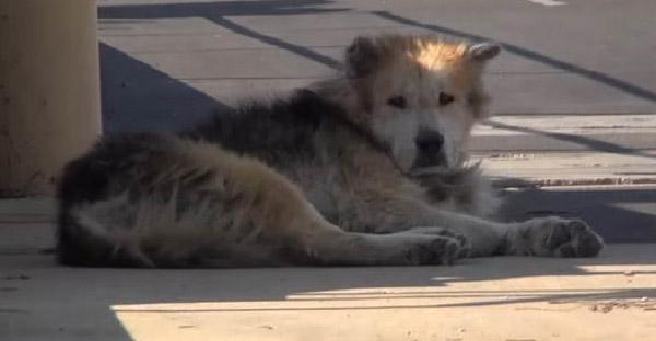 กู้ภัยสัตว์ช่วยชีวิตหมาจรจัดในโรงบำบัดน้ำ ก่อนที่ทุกอย่างจะสายเกินไป