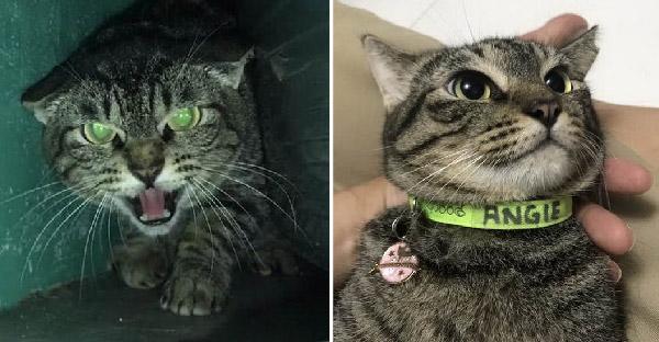 แมวขี้กลัวไม่ยอมให้ใครสัมผัสตัวนานแรมปี แต่เจอสาวตื้อจนครองใจได้ในที่สุด