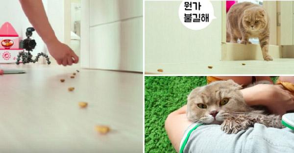 เมื่อแมวเหมียวถูกมนุษย์วางอาหารล่อให้มาอาบน้ำ จึงกลายเป็นเหตุการณ์ฮาๆขึ้น
