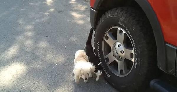 แมวคลอเคลียสุนัขตาบอดเพราะความสนิท แต่กลายเป็นการพาเดินเล่นอย่างปลอดภัย