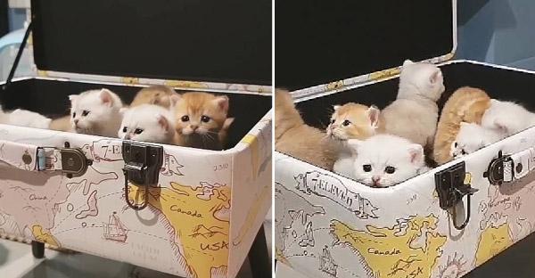 """แก๊งลูกแมวตัวน้อยรีวิว """"เก้าอี้มหาสมบัติ"""" ของเซเว่น งานดีถูกอกถูกใจทาสแมวเป็นที่สุด"""