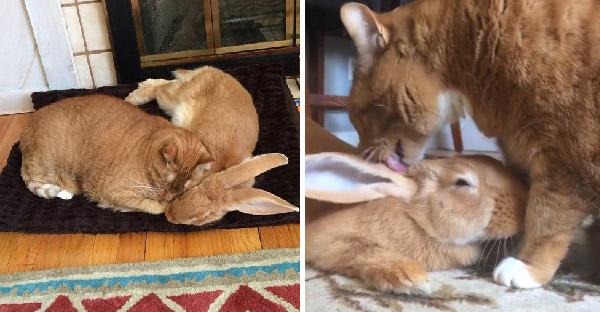 เมื่อกระต่ายยักษ์กับแมวเหมียวกลายเป็นคู่หูฝาแฝด ที่เจ้าของยังแปลกใจไม่น้อย