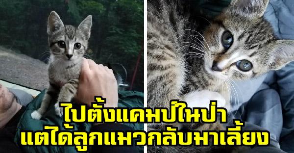 คู่รักไปตั้งแคมป์ในป่า แต่กลับเจอลูกแมวหลงทางร้องเสียงหวานเดินเข้ามาหาถึงเต๊นท์