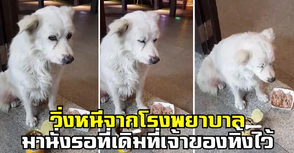 หมาน้อยวิ่งหนีออกจากโรงพยาบาล มานั่งรอที่เดิมที่เจ้าของทิ้งมันไป