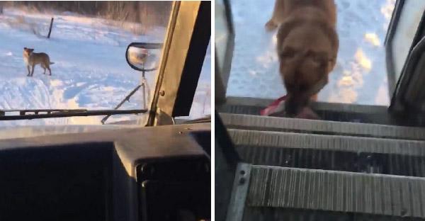 น้องหมามารอรถบัสคันเดิมทุกวัน เพราะอาหารหนึ่งมื้อที่เคยได้รับจากคนขับรถ