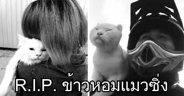 น้องข้าวหอมแมวซิ่งเสียชีวิตกะทันหัน ชาวเน็ตแห่ไว้อาลัยสุดเศร้า