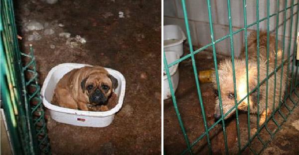 ตำรวจบุกค้นบ้านนักเพาะพันธุ์สุนัข สภาพความเป็นอยู่เลวร้ายกับหมาน่าสงสารอีกสองตัว
