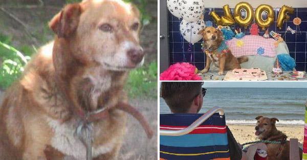 กู้ภัยช่วยเหลือสุนัขถูกล่ามมาทั้งชีวิต ให้มีอิสระเป็นครั้งแรก ในช่วง 16 วันสุดท้ายของชีวิต
