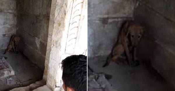 กู้ภัยสัตว์ช่วยสุนัขจรจัดบาดเจ็บอยู่ในวัด พร้อมอธิษฐานขอให้รอดชีวิตออกไปให้ได้