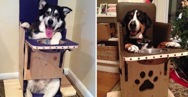 """""""เก้าอี้กินข้าว"""" อุปกรณ์สุดวิเศษที่ช่วยปกป้องชีวิตของสุนัขหลายร้อยชีวิตจากโรคร้าย"""
