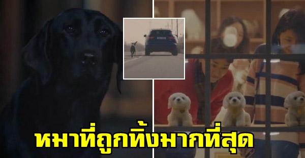 เผยเรื่องราวอันน่าเศร้าของหมาดำ กับชีวิตที่เลือกเกิดไม่ได้ และถูกทอดทิ้งมากที่สุด