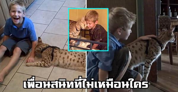 พ่อ-แม่เลี้ยงแมวป่าซาวันนาห์ให้เป็นเพื่อนสนิทของลูกชาย