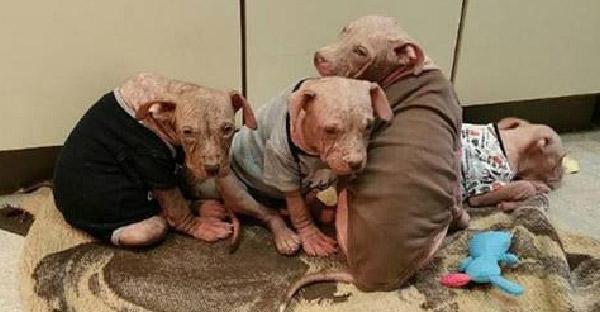ลูกสุนัขถูกทิ้งให้ทรมานจนโรครุมเร้า ก่อนพวกเขาจะช่วยออกจากบ้านร้างได้สำเร็จ