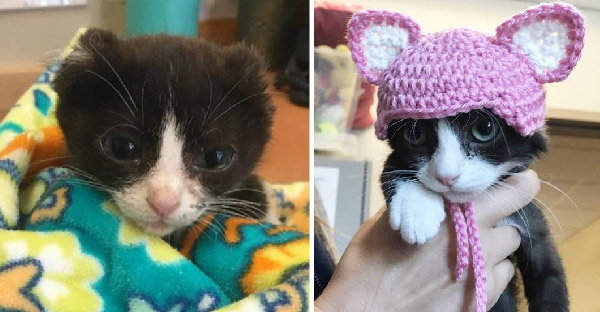 สาวถักโครเชต์น่ารักๆให้กับลูกแมวไร้หู ที่ช่วยเติมเต็มสิ่งที่ขาดหายไปในชีวิต