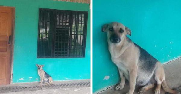 แม่หมาท้องแก่นั่งรอเจ้าของทุกวัน หลังพวกเขาย้ายบ้านและทิ้งมันไว้เบื้องหลัง