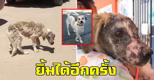 คนใจดีช่วยชีวิตสุนัขข้างถนนที่เกือบยอมแพ้ และสร้างรอยยิ้มบนใบหน้าให้อีกครั้ง