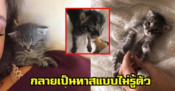 สาวตั้งใจเลี้ยงลูกแมวจรจัดชั่วคราว แต่แพ้ความน่ารักทำให้เธอกลายเป็นทาสแมวถาวร