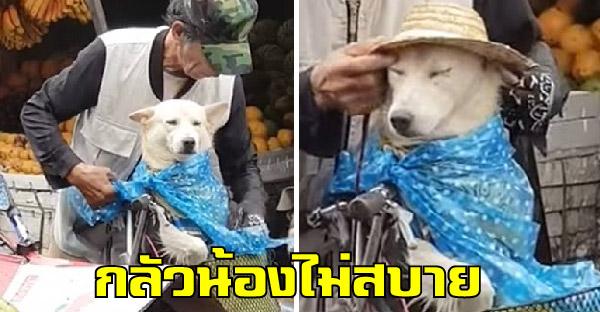 คุณลุงผู้น่ารักเอาหมวกและถุงพลาสติก ปกป้องน้องหมาจากสายฝน