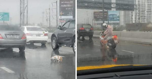 หนุ่มช่วยแมวหลงกลางสะพานเกือบโดนรถชน ชาวเน็ตแห่ชื่นชมกันล้นหลาม