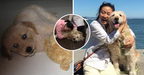 เจ้าของกอดร่างหมาสุดรักและร้องไห้อย่างเสียสติ หลังเพื่อนบ้านรวมหัวกันวางยา
