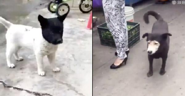 สุนัขหน้าสองสีคู่เหมือนที่แตกต่าง ทำชาวเน็ตขำลั่นไปทั้งโซเชียล
