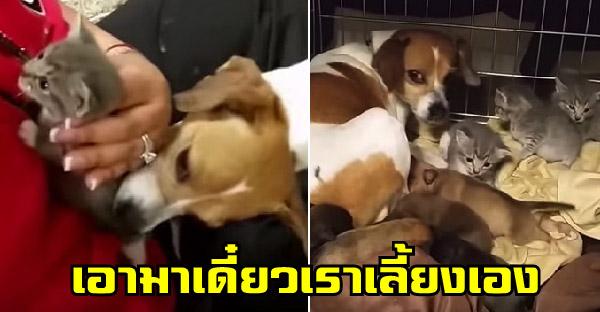แม่หมาลูกเจ็ดคาบลูกแมวกำพร้าอีกสามตัวจากมือมนุษย์ ขอเอาไปเลี้ยงเองหน้าตาเฉย