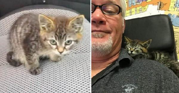 ชายคว้าลูกแมวที่นั่งตัวสั่นกลางถนนขึ้นรถ และเปลี่ยนให้มันเป็นทูนหัวของบ่านในพริบตา