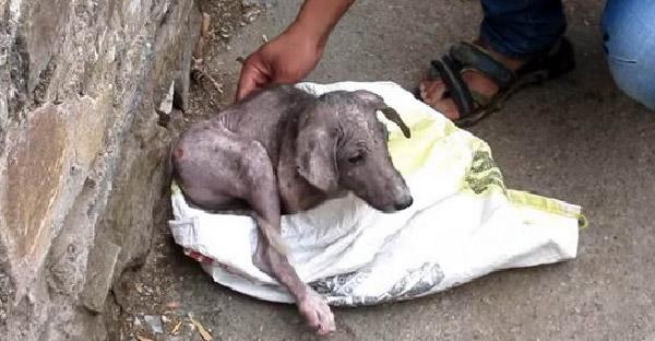 ลูกหมาถูกใส่กระสอบทิ้งไว้ข้างถนน ก่อนกู้ภัยสัตว์ช่วยเหลือจนเปลี่ยนไปอย่างน่าอัศจรรย์