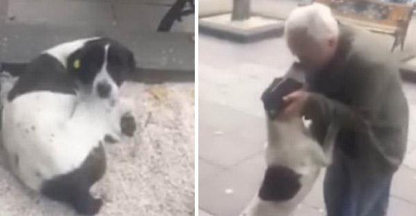 คุณลุงไม่ยอมแพ้ตามหาสุนัขหาย 3 ปีจนเจอ และวินาทีที่ได้พบกันมันช่างคุ้มค่าจริงๆ