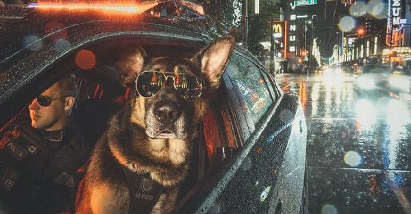 ตำรวจแวนคูเวอร์ออกปฏิทินการกุศลปี 2019 และภาพที่ออกมามันเจ๋งโคตรๆ