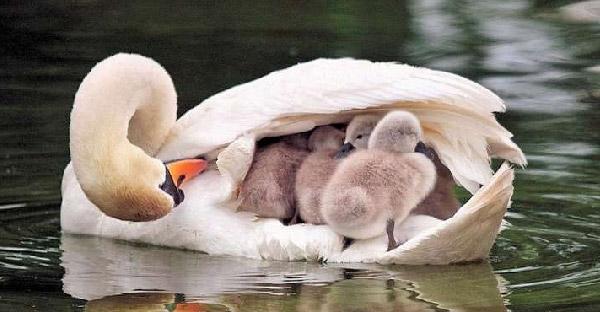 23 สัญชาตญาณความเป็นแม่ของสัตว์โลก ที่แสดงให้เห็นว่าความรักยิ่งใหญ่มากเพียงใด