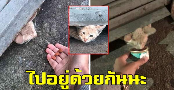 ลูกแมวซ่อนตัวนานหลายสัปดาห์ ก่อนสาวใจดีจะล่อด้วยอาหารและจับตัวได้สำเร็จ