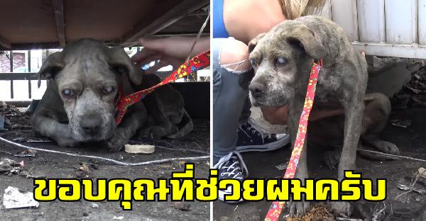 กู้ภัยสัตว์ช่วยสุนัขในโรงงานขยะ ถูกเจ้าของเก่าทอดทิ้งเพราะหมดความน่ารักแล้ว