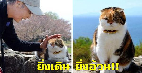 คุณลุงพาแมวเดินขึ้นเขาตลอด 7 ปี หวังช่วยฟิตหุ่น แต่น้ำหนักกลับพุ่งพรวดขึ้นเรื่อยๆไม่มีหยุด