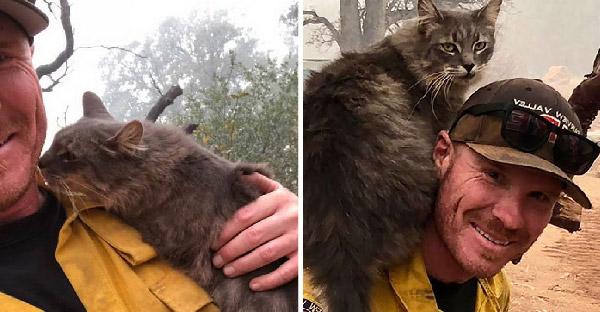 นักผจญเพลิงช่วยแมวจากไฟป่าในแคลิฟอร์เนีย มันจึงขอบคุณและเลือกให้เป็นทาสคนใหม่ซะเลย