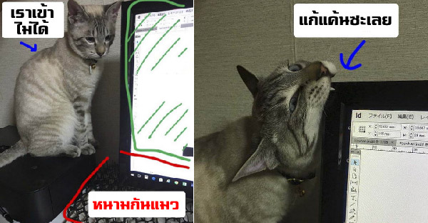 เมื่อทาสต้องไฝว้กับแมวไม่ให้กวนเวลาทำงาน จึงกลายเป็นเรื่องราวเฮฮาสนั่นโลกออนไลน์