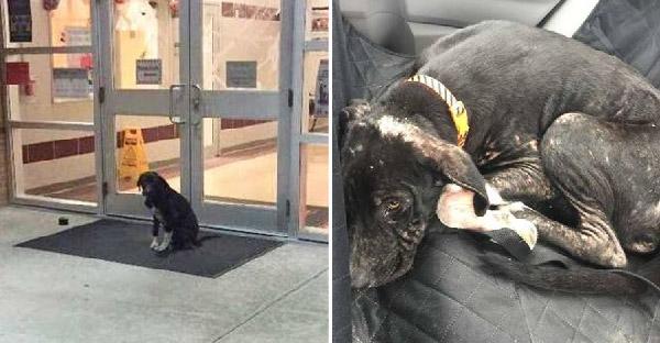 สุนัขจรจัดนั่งหน้าประตูโรงเรียนทุกเช้า จนคุณครูประถมยื่นมือช่วยเหลือและเปลี่ยนชีวิตมันไปตลอดกาล